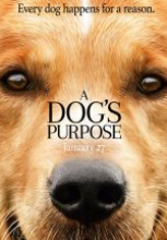 Can Dostum – A Dog's Purpose tek part film izle 2017